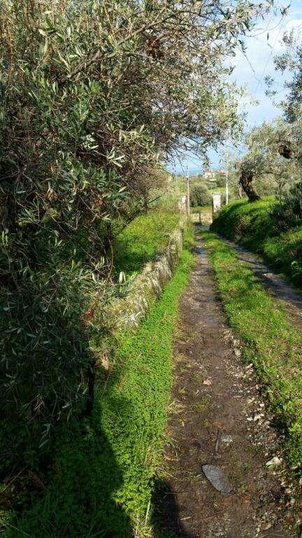 Terreno agricolo in vendita a pace del mela cattafi for Acquisto piante ulivo